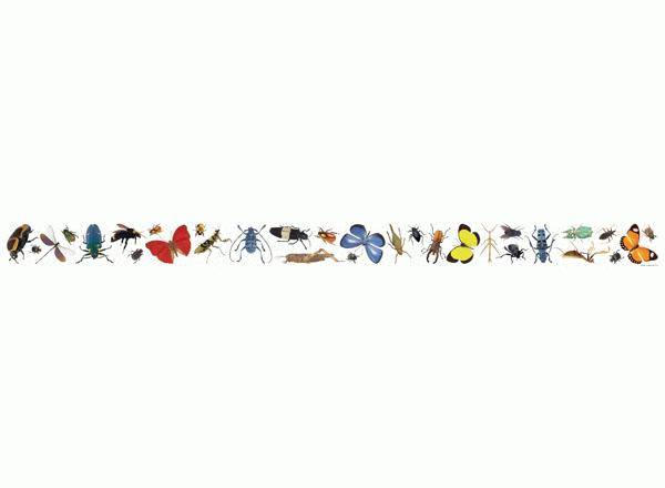 insects photo border christmas music border clip art music notes border clip art