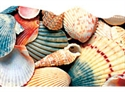 Picture of Sea Shell Discovery Border