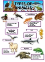 Picture for category Animal Classifications