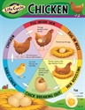 Picture of Life Cycle of a Chicken Learning Chart