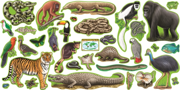 Satisfactory image inside printable rainforest animals